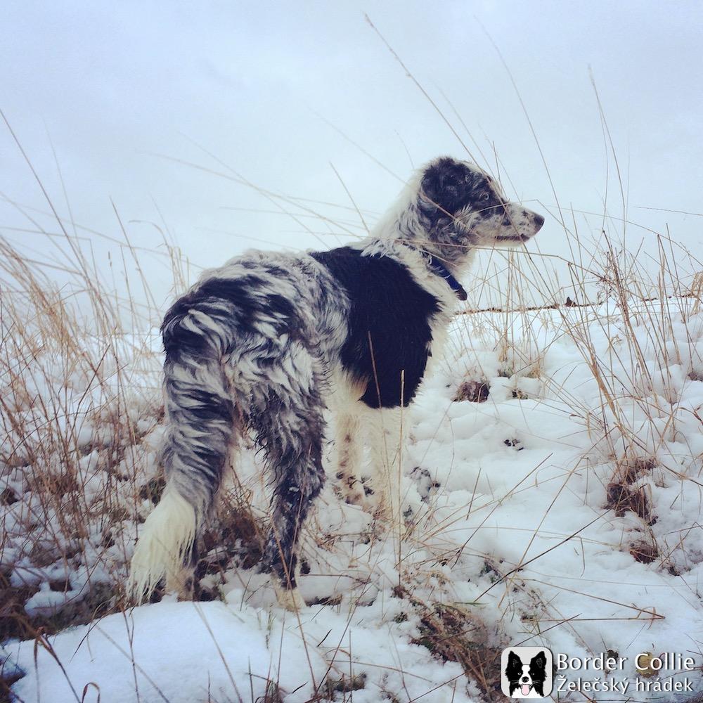 Phoebe_ŽH_v zimě