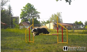 Dafy běží agility