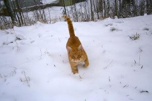 kocin_zabava_v_zime